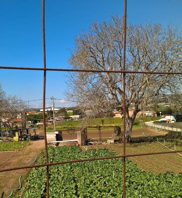 Hortas e o passado aqui tão perto - Paula Ferreira