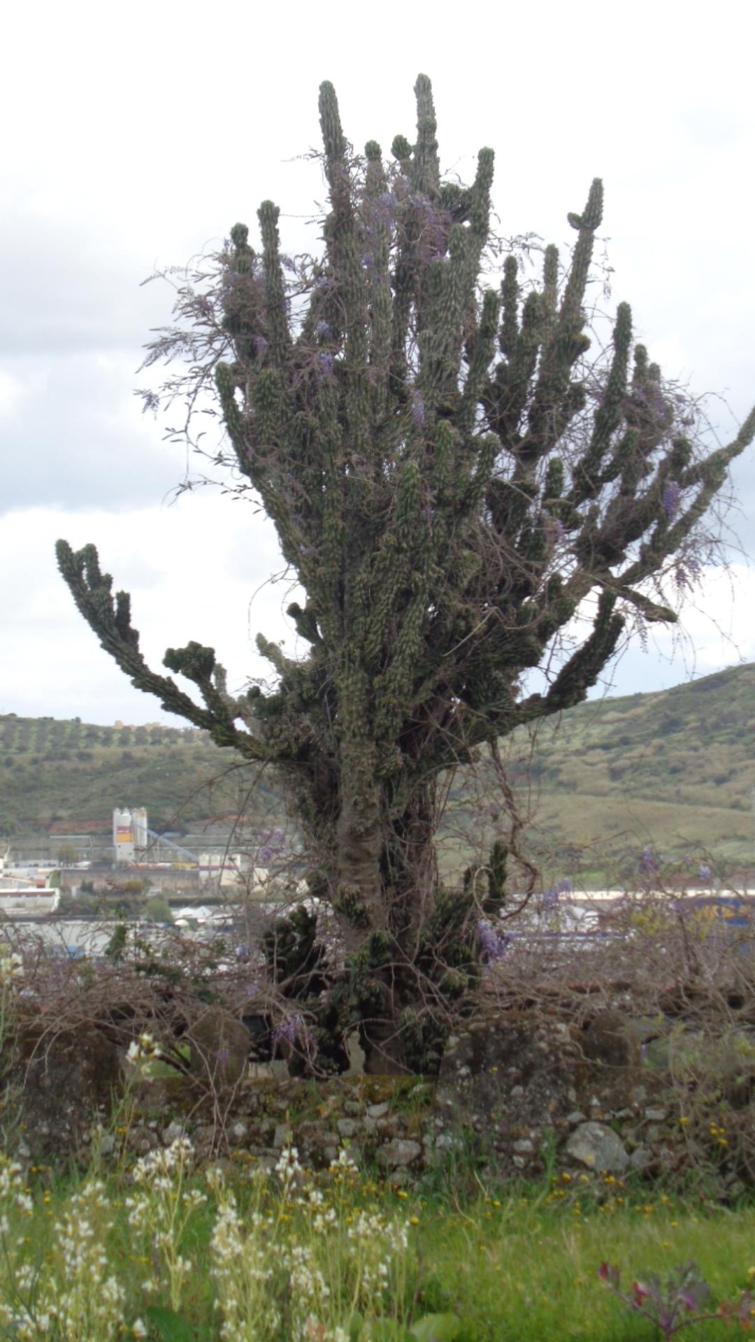 Espécie arbórea a preservar - Ana Almeida